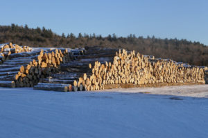 photo of Maine lumber in the sun and snow